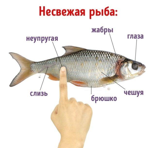 не свежая рыба