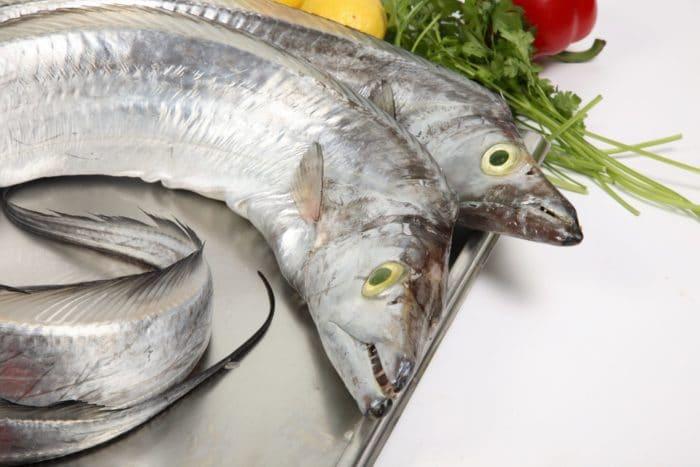 чем полезно мясо рыбы сабли для человека