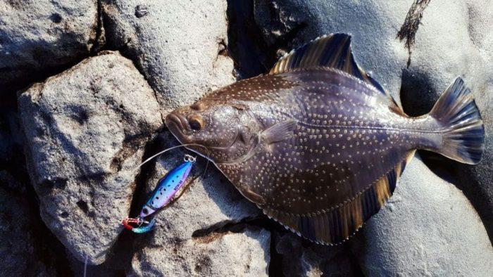 плоская рыба камбала
