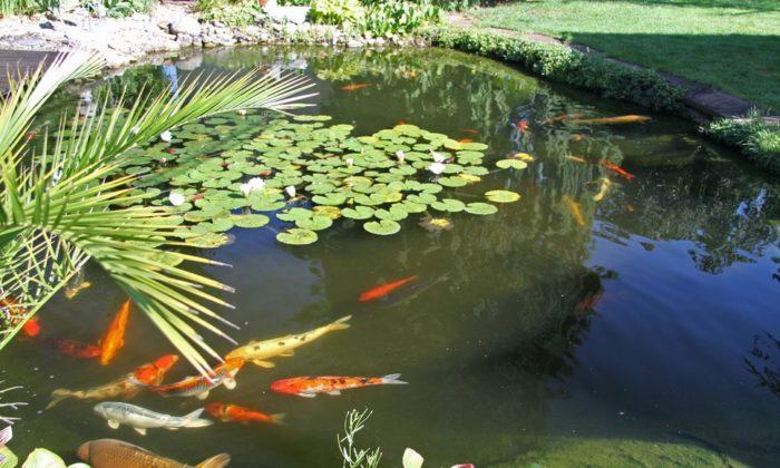 особенности содержания рыбы