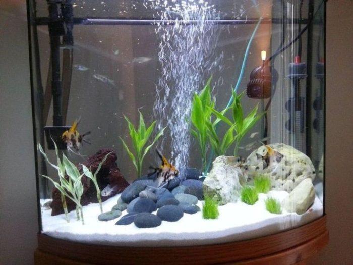 чистая вода в аквариуме