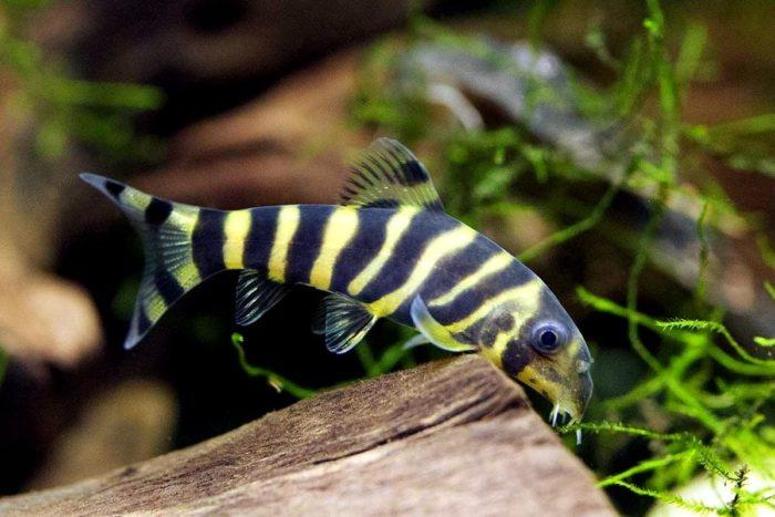 яркая рыбка