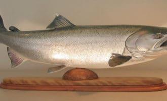 особенности строения рыбы кижуч