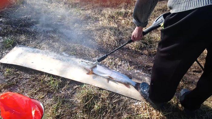 как почистить рыбу с помощью керхера