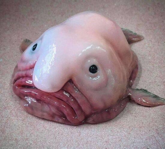 сложно представить что на фото рыба