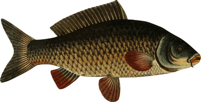 особенности строения и внешнего вида большинства хрящевых рыб