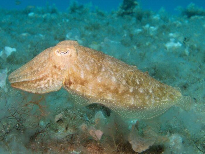кальмары меняют оттенок