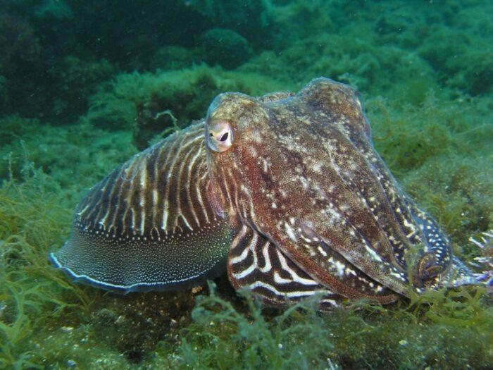 в теле осьминогов и кальмаров есть рудимент