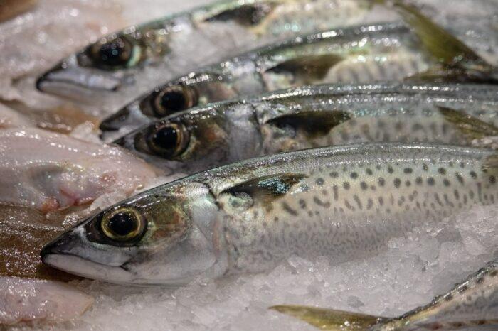 почему морская рыба полезнее речной