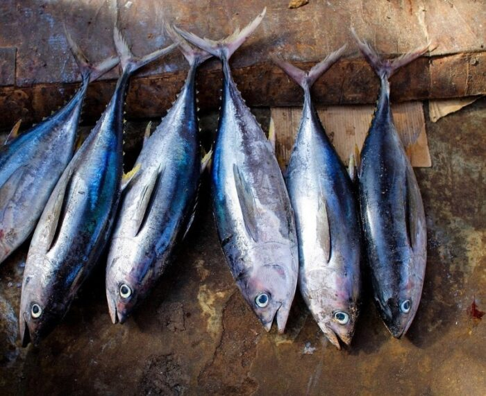популярная красная рыба тунец