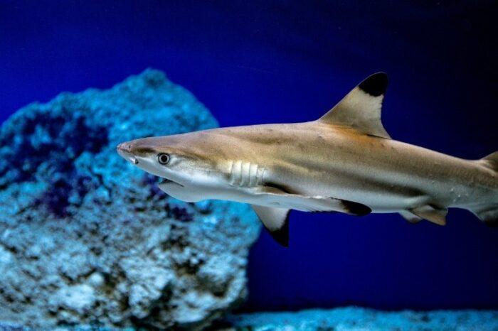 акула является главным страхом дайверов
