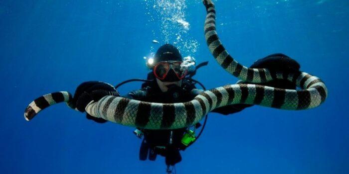 как выглядит морская змея