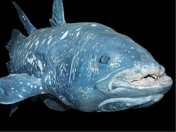рыба латимерия очень ценная