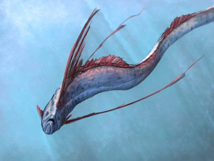 Рыба ремень очень быстро плавает