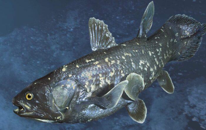 рыба латимерия имеет особенное строение