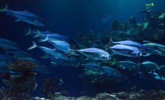 какие рыбы обитают в России