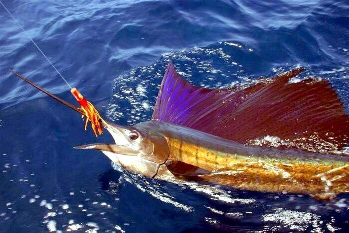 вылов марлина часто является заданием на рыболовных состязаниях