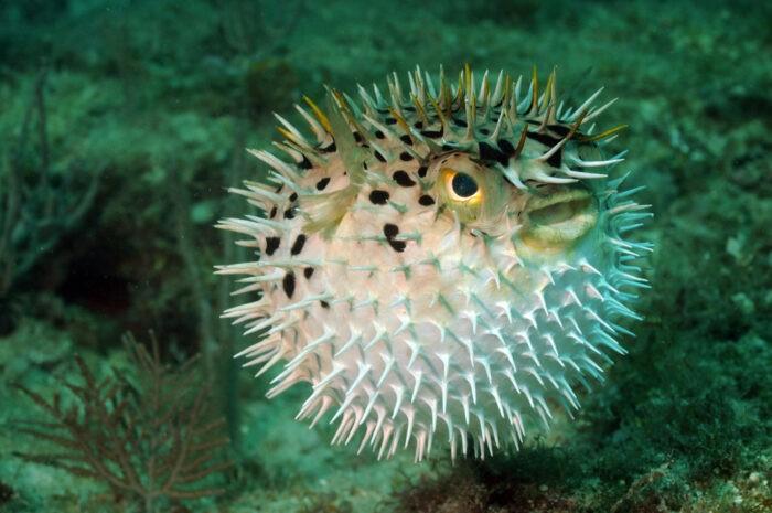 шар не имеет врагов под водой потому что может себя защитить