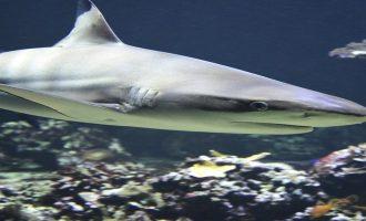 первые акулы появились задолго до динозавров