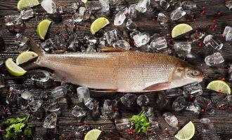 особенности строения важной промысловой рыбы