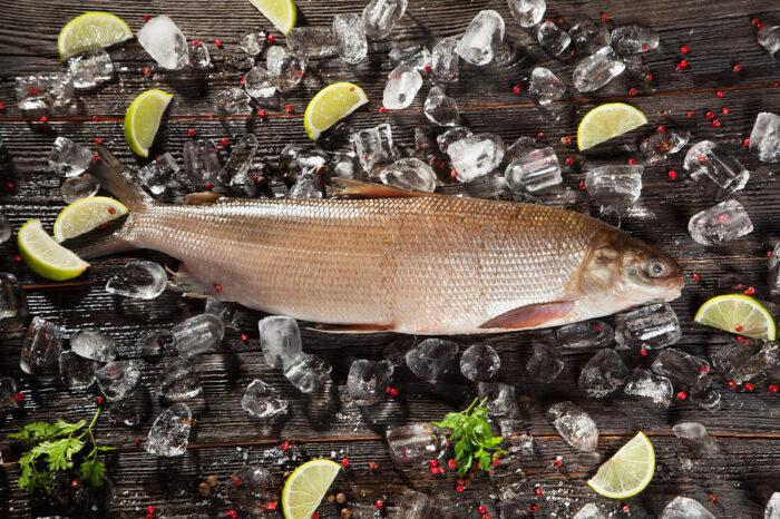 чир довольно крупная рыба