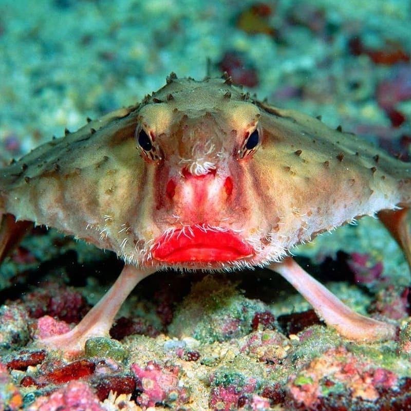 у этой рыбы лицо, похожее на человека