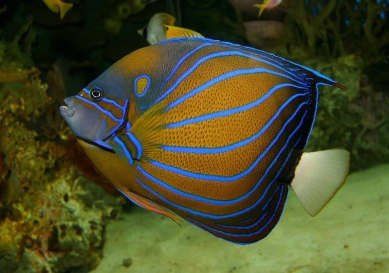 Какая рыба умеет ходить по дну или суше: 3 весьма интересных вида
