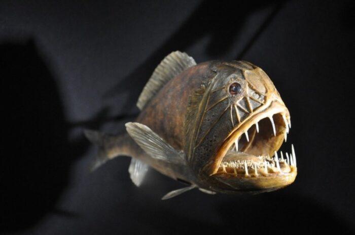 длиннорогий саблезуб незаметен под водой