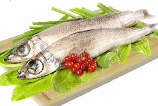 Что за рыба аргентина