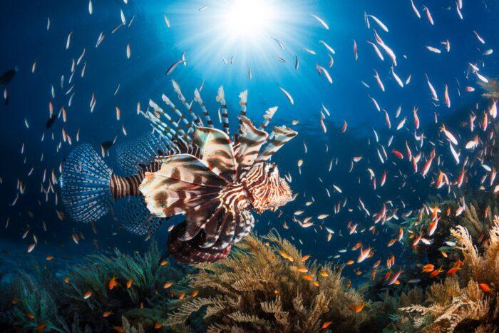 Подводный океанический и морской мир
