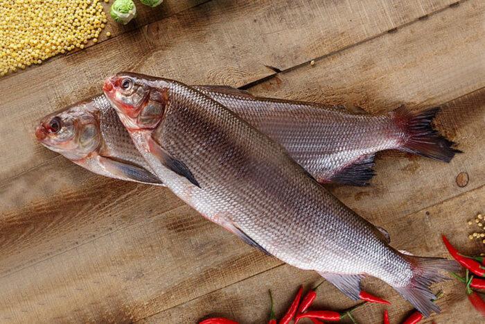 особенности рыбалки в северных морях