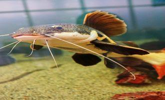 правила соседства в аквариуме