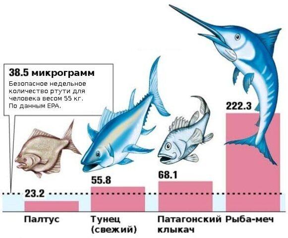насколько опасно употреблять тунца