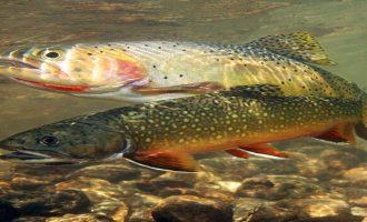 рыба пресного водоема