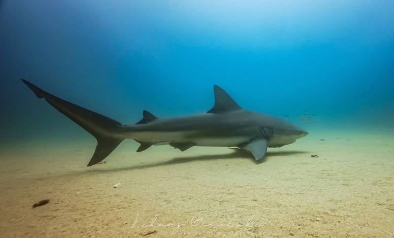 плыть с акулой в лодке страшно