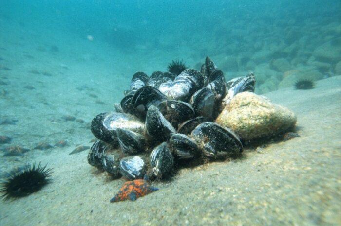 морское дно с основным питанием ската