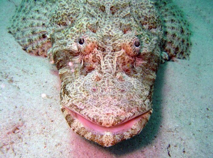 рыба крокодил очень похожа на земноводного родственника