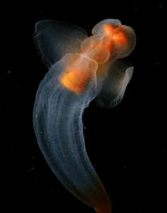 моллюск