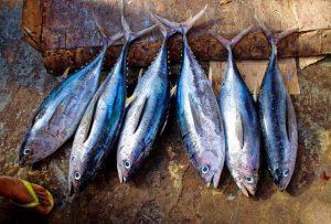 тунец является полезной морской рыбой