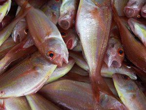рыбу можно есть термически обработанной