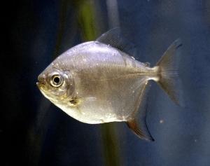 особенности строения рыбки