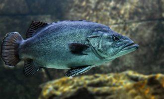 в морской рыбе есть паразиты