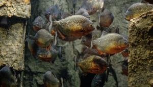 крупные рыбы в естественной среде