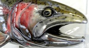 вишневый лосось или сима является ценной красной рыбой