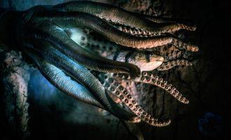 внешний вид щцпалец осьминога