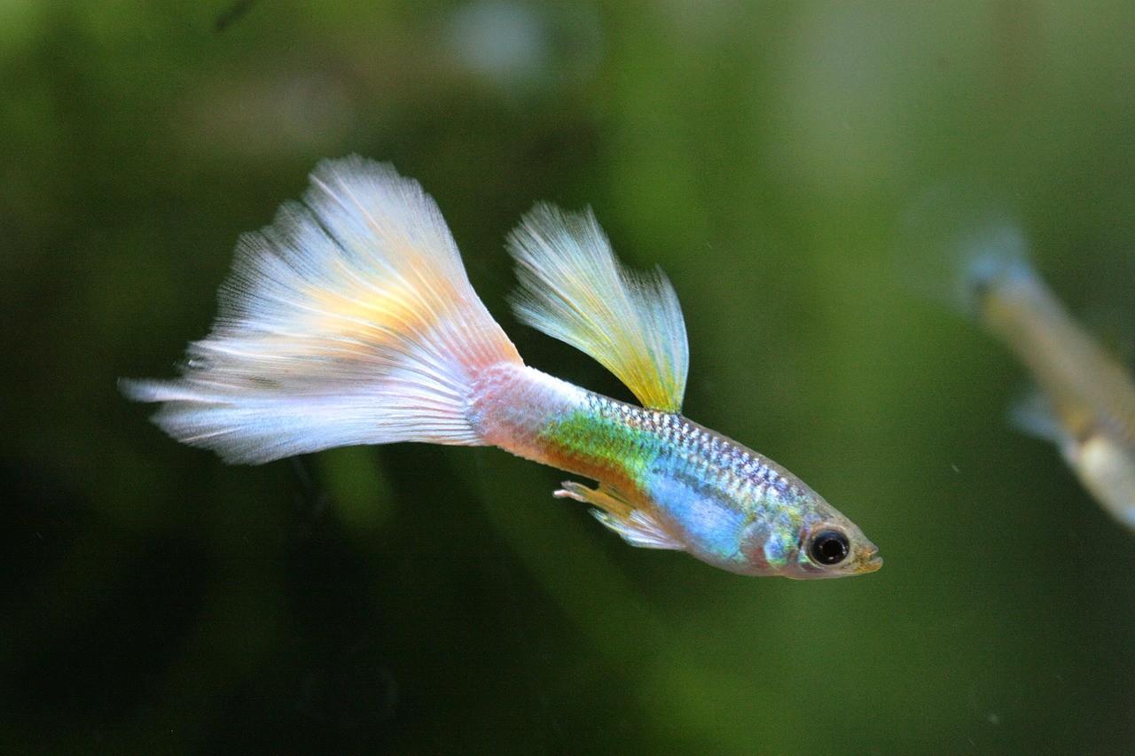рыба с неоновой чешуей