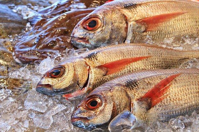 почему исчезлы отдельные виды рыб