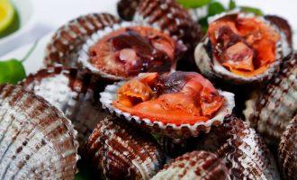 внешний вид кровавого моллюска анадара