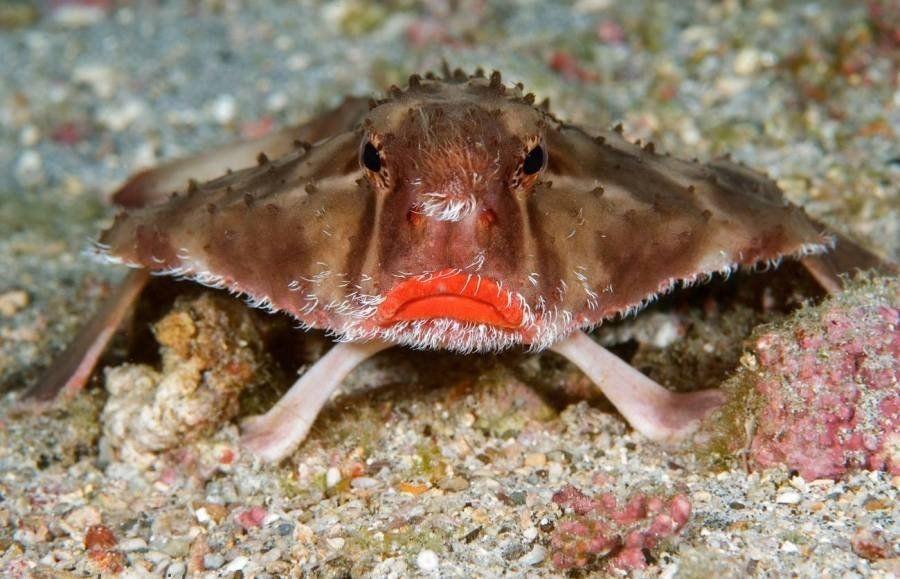 внешний вид рыбы с накрашенными губами