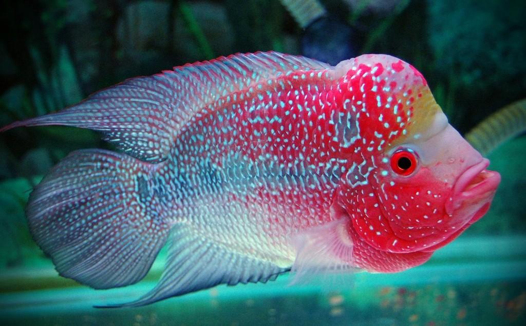 рыба с большой головой